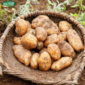 贵州威宁土豆2.5kg